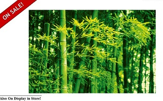 "Bamboo in Spring 68""x42"" Wall Art"